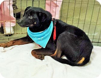 Terrier (Unknown Type, Small) Mix Dog for adoption in Alexis, North Carolina - Ritchie