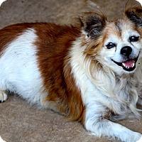 Adopt A Pet :: Harley - Kempner, TX