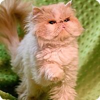 Adopt A Pet :: Twinkie - Columbus, OH