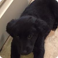 Adopt A Pet :: Winken - Richmond, VA