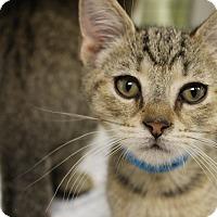 Adopt A Pet :: Lebron - Medina, OH