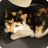 Adopt A Pet :: Noelle - Youngsville, NC