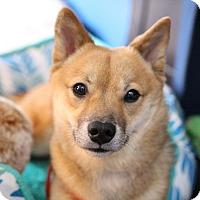 Adopt A Pet :: Yusei - Manassas, VA