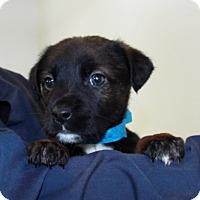 Adopt A Pet :: Nike - Grants Pass, OR