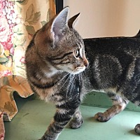 Adopt A Pet :: Lolly - Jeannette, PA