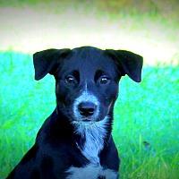 Adopt A Pet :: Sadie - Southbury, CT