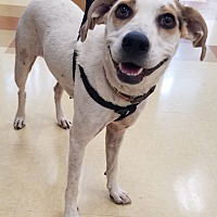 Adopt A Pet :: Allie - Lyles, TN