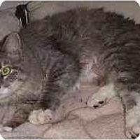 Adopt A Pet :: Azurra - Scottsdale, AZ