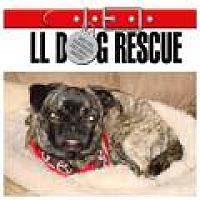 Adopt A Pet :: Digger - Shawnee Mission, KS