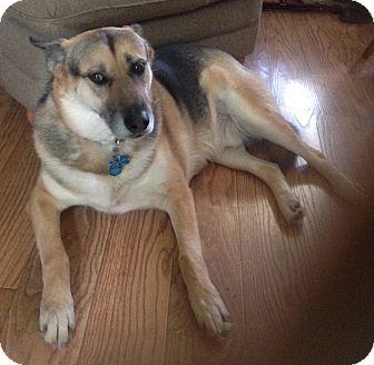 German Shepherd Dog Mix Dog for adoption in Oakland, Arkansas - Gus