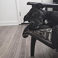 Adopt A Pet :: Edgar (Courtesy) - High Point, NC