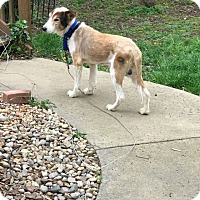 Adopt A Pet :: Caleb - Powell, OH