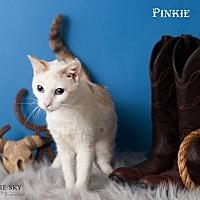 Adopt A Pet :: Pinkie - Glendale, AZ