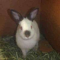 Adopt A Pet :: A1703441 - Los Angeles, CA