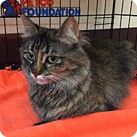 Adopt A Pet :: Ashley (MP) - Little Falls, NJ