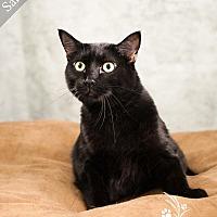 Adopt A Pet :: Sammie *$20 Fee 8/2 - 8/31* - Ottawa, KS