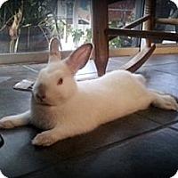 Adopt A Pet :: Alex - Williston, FL
