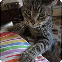Adopt A Pet :: Ty - Xenia, OH