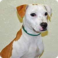 Adopt A Pet :: Liela - Port Washington, NY