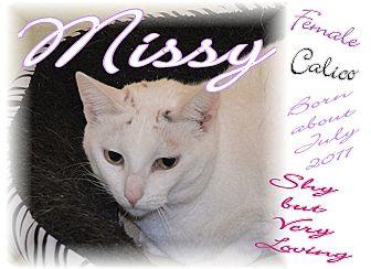 Domestic Shorthair Cat for adoption in Richmond, Missouri - Missy