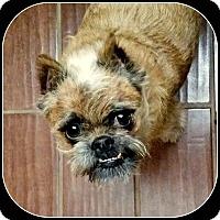 Adopt A Pet :: BARON - ADOPTION PENDING - Mesa, AZ