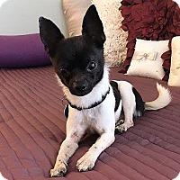 Adopt A Pet :: Kip - AUSTIN, TX