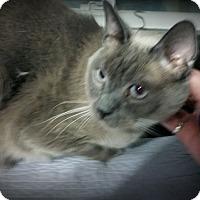 Adopt A Pet :: Bosley - Fairborn, OH