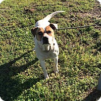 Adopt A Pet :: ABBY - McCurtain, OK