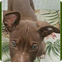 Adopt A Pet :: Flynn - Elburn, IL