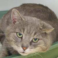 Domestic Shorthair/Domestic Shorthair Mix Cat for adoption in Ridgely, Maryland - Hinder