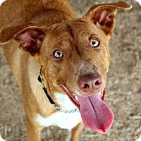 Adopt A Pet :: Sammy - Killeen, TX