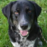 Adopt A Pet :: Buddy - Cumberland, MD