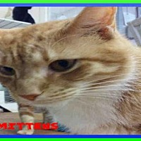Adopt A Pet :: MITTENS - Fort Walton Beach, FL