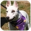 Photo 1 - Bull Terrier Mix Dog for adoption in Claymont, Delaware - Petra