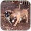 Photo 1 - Australian Shepherd Mix Puppy for adoption in Savannah, Georgia - Reese