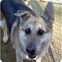 Adopt A Pet :: Lena - Pike Road, AL