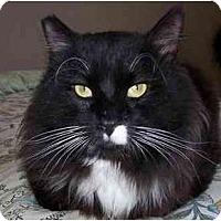 Adopt A Pet :: Gringo (*video*) - Portland, OR