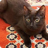 Adopt A Pet :: Tiffany - Bedford, MA
