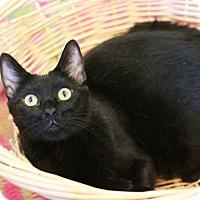 Adopt A Pet :: Commander - Canoga Park, CA