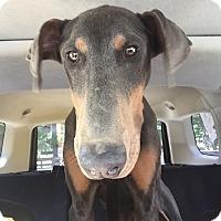 Adopt A Pet :: Tucker--pending - New Richmond, OH