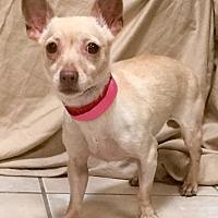 Adopt A Pet :: Josephine - Phoenix, AZ