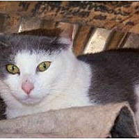 Adopt A Pet :: Nichols - Winnsboro, SC