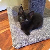 Adopt A Pet :: Sylvester - Boynton Beach, FL