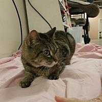 Adopt A Pet :: Cally - Trenton, MO
