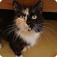 Adopt A Pet :: Holly-$50 - Brimfield, MA