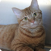 Adopt A Pet :: Curly - Naperville, IL