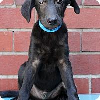 Adopt A Pet :: Tupelo - Waldorf, MD