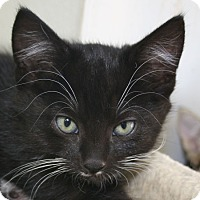 Adopt A Pet :: Chimichanga - Republic, WA