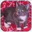 Photo 2 - Domestic Shorthair Kitten for adoption in Murphysboro, Illinois - Mopsy