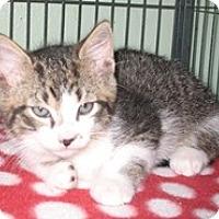 Adopt A Pet :: Dasher - Shelton, WA